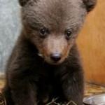 Зоопарк «Лимпопо» в Нижнем Новгороде